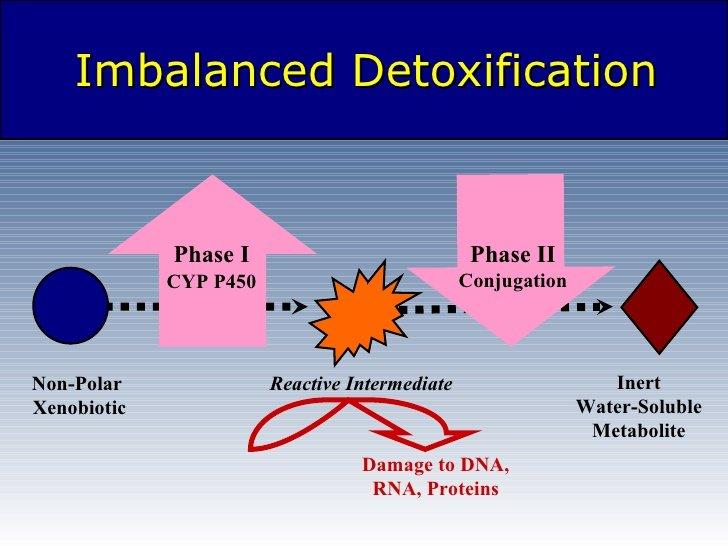 importance of phase 2 liver detox