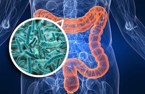 Gut Microbiome Test